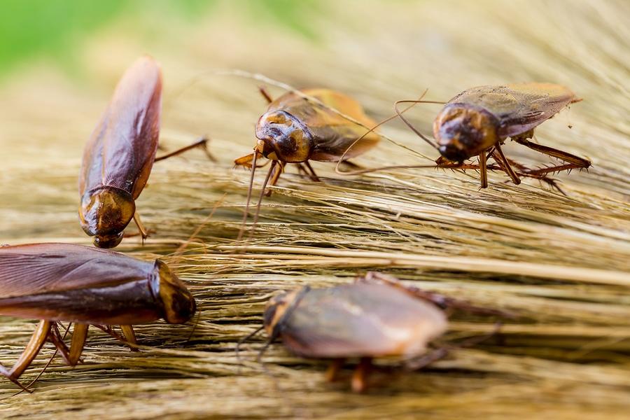 6 Common Pest Problems in Australia