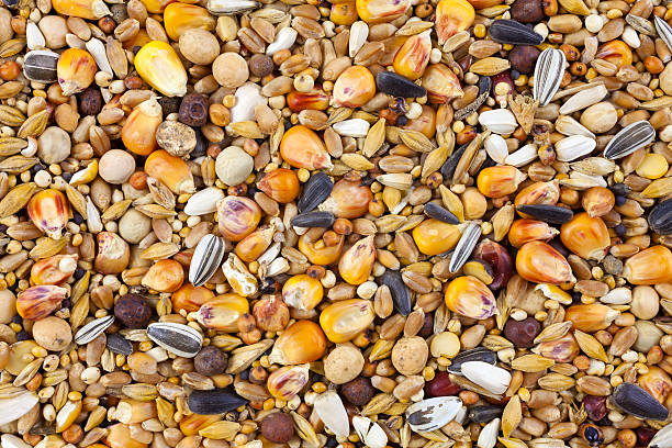 wild bird seed store
